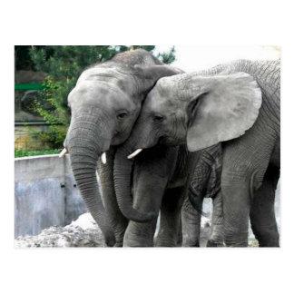 Elephant Love Kiss Peace and joy Postcard