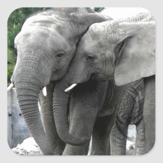 Elephant Love Kiss Peace and joy Square Sticker