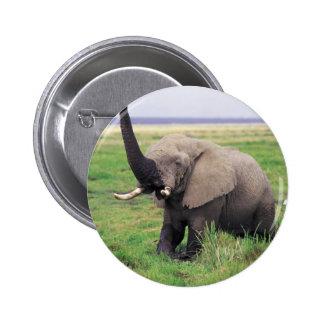 Elephant love pinback button