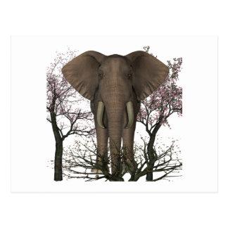 Elephant Lover Postcard