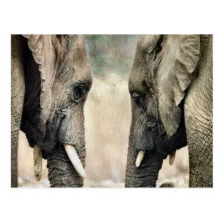 Elephant Lovers Art Gifts Postcard