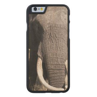 Elephant (Loxodonta africana), Abu Camp 3 Carved Maple iPhone 6 Slim Case