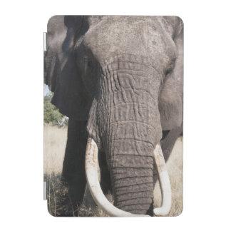 Elephant (Loxodonta africana), Abu Camp 3 iPad Mini Cover