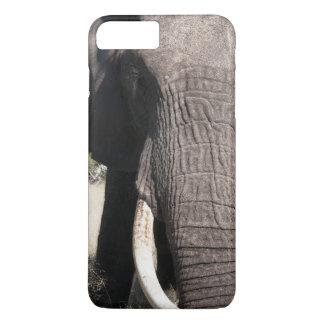 Elephant (Loxodonta africana), Abu Camp 3 iPhone 7 Plus Case