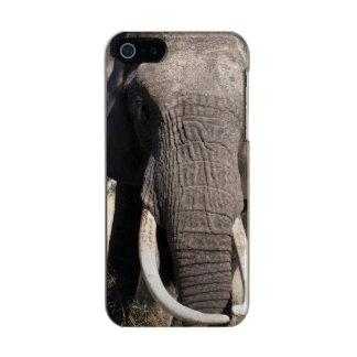 Elephant (Loxodonta africana), Abu Camp 3 Metallic Phone Case For iPhone SE/5/5s