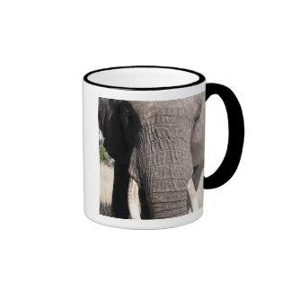 Elephant (Loxodonta africana), Abu Camp 3 Coffee Mugs