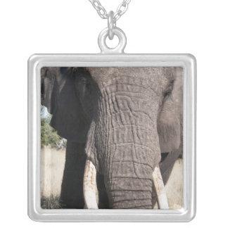Elephant (Loxodonta africana), Abu Camp 3 Square Pendant Necklace