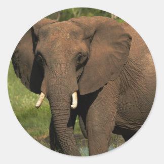 Elephant (Loxodonta Africana), Hwange National Classic Round Sticker