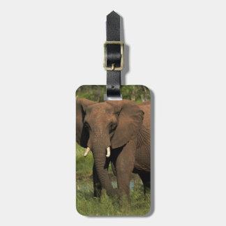 Elephant (Loxodonta Africana), Hwange National Bag Tags