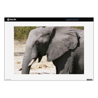 "Elephant (Loxodonta africana), Savute Channel 15"" Laptop Decal"