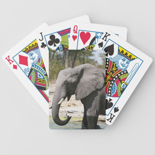 Elephant (Loxodonta africana), Savute Channel Bicycle Playing Cards