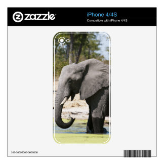 Elephant (Loxodonta africana), Savute Channel iPhone 4 Skins