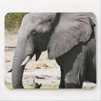 Elephant (Loxodonta africana), Savute Channel Mousepad