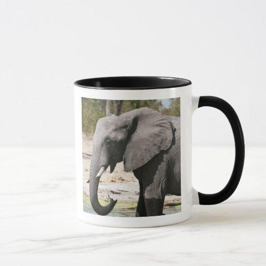 Elephant (Loxodonta africana), Savute Channel Mug
