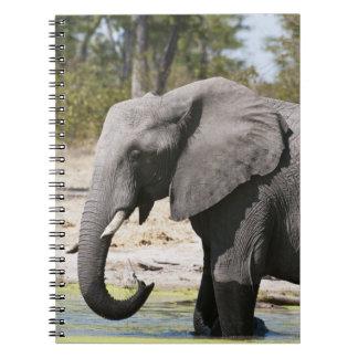 Elephant (Loxodonta africana), Savute Channel Spiral Note Books