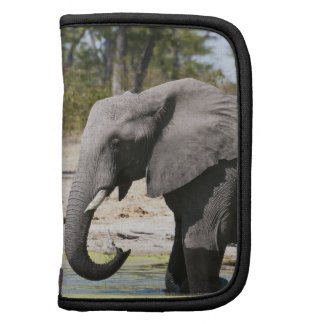 Elephant (Loxodonta africana), Savute Channel Planner