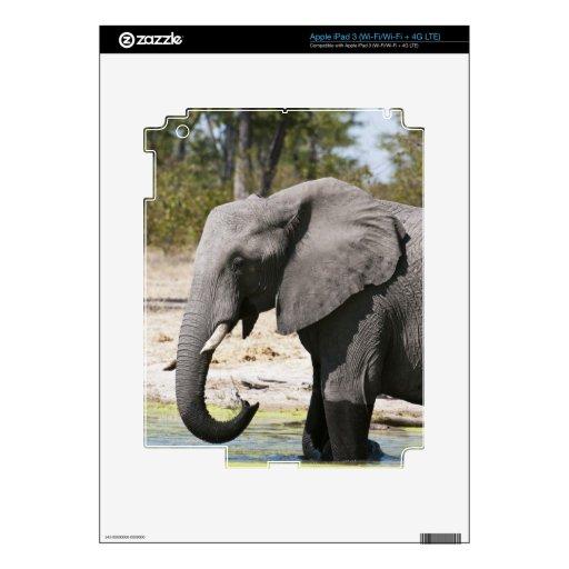 Elephant (Loxodonta africana), Savute Channel Decals For iPad 3