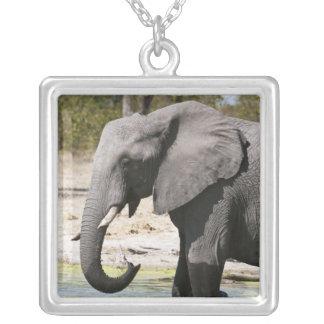 Elephant (Loxodonta africana), Savute Channel Square Pendant Necklace
