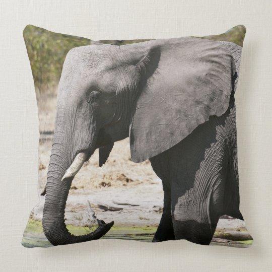 Elephant (Loxodonta africana), Savute Channel Throw Pillow
