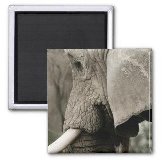 Elephant  Magnet Magnet