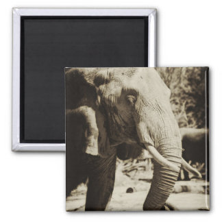 Elephant 2 Inch Square Magnet