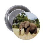 Elephant Masai Mara, Kenya badge button