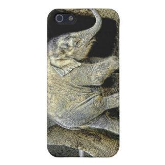 Elephant Newborn iPhone SE/5/5s Case