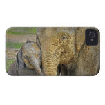 Elephant Newborn Mom Baby Hug iPhone 4 Cases