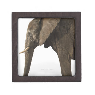 Elephant on white background, side view gift box