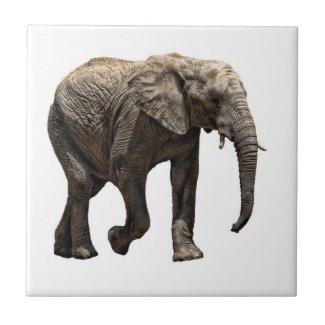 ELEPHANT ON WHITE tile