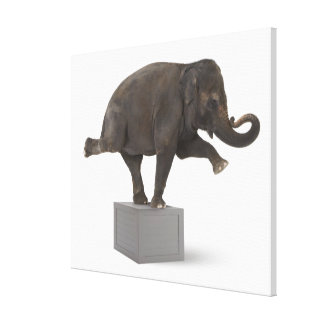 Elephant performing trick on box canvas print