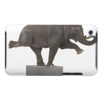 Elephant performing trick on box Case-Mate iPod touch case