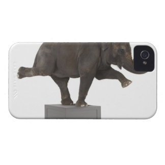 Elephant performing trick on box iPhone 4 case