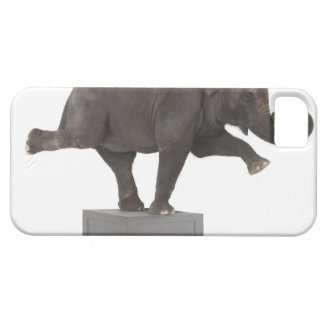 Elephant performing trick on box iPhone SE/5/5s case