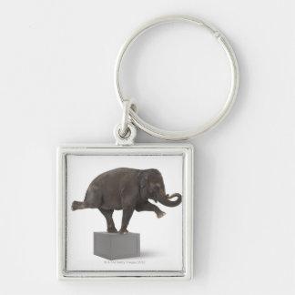 Elephant performing trick on box keychain
