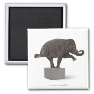 Elephant performing trick on box magnet