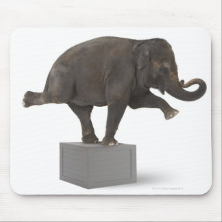 Elephant performing trick on box mouse pad