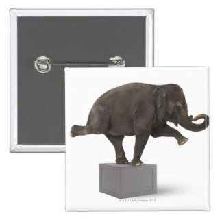 Elephant performing trick on box pinback button
