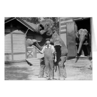 Elephant Performs a Trick, 1915 Card