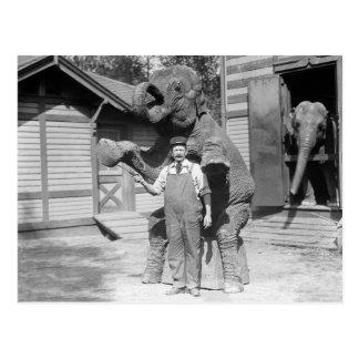 Elephant Performs a Trick, 1915 Postcard