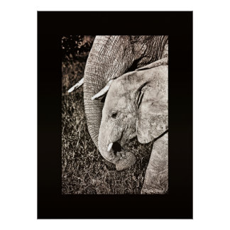 Elephant photo African art COLOSSAL size Posters