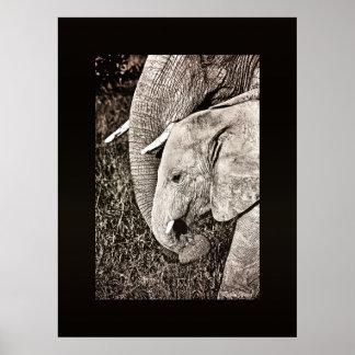 Elephant photo African art HUGE size Print