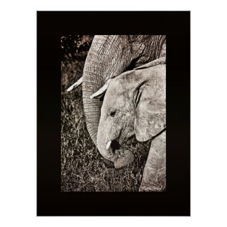 Elephant photo African art LARGE size Print
