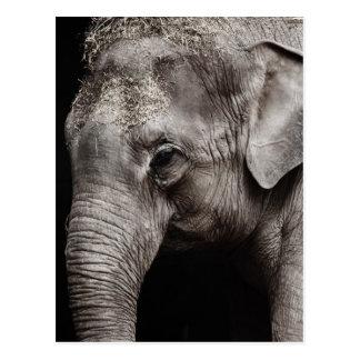 Elephant Photo Postcard