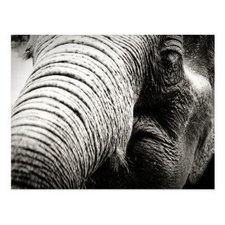 Elephant photograph in B&W Postcard