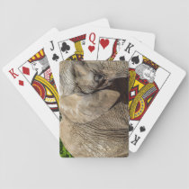 Elephant Playing Cards