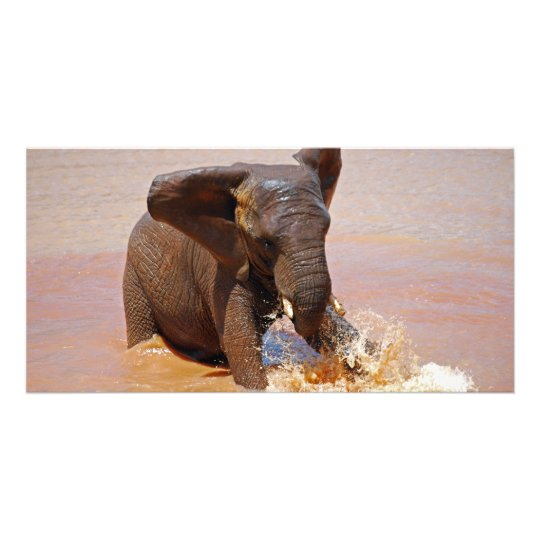Elephant playing with water card