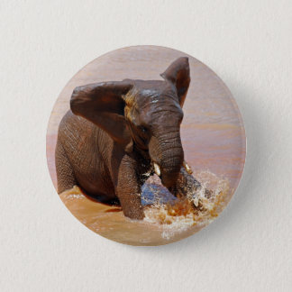 Elephant playing with water pinback button