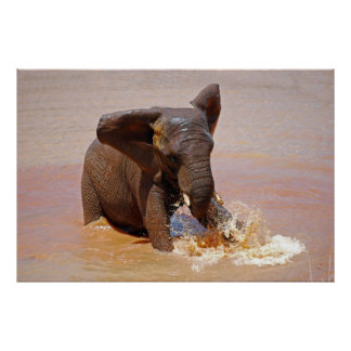 Elephant playing with water poster