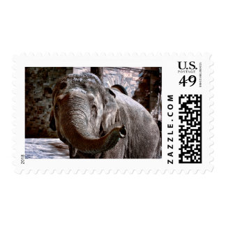 Elephant Pointing Forward with the Trunk Postage